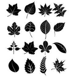 Leaf icons set vector image