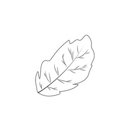 Line leaf plant and natural condiment vector