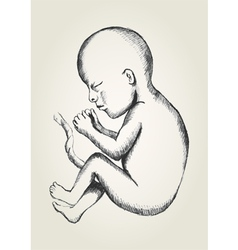 Sketch of human fetus vector