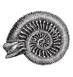 Snakestone ammonite vintage vector