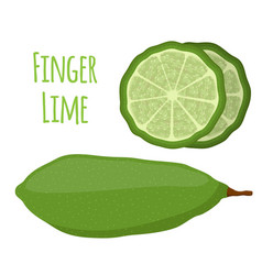 tropical finger lime cartoon flat style vector image