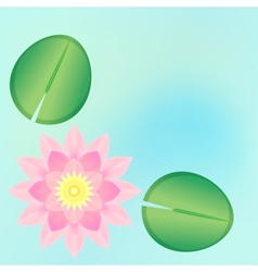 pink waterlily background vector image