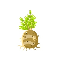 Fresh turnip primitive realistic vector