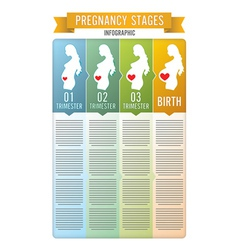 Pregnancy stages vector