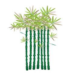 A Beautiful Isometric of Green Bamboo Plants vector image vector image