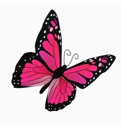 a colorful butterfly vector image