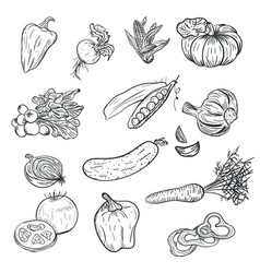 hand drawing vegetables in doodle style isolated vector image