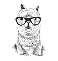 hand drawn dressed up llama in hipster style vector image