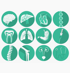 internal human organs set and medical instruments vector image