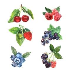 Watercolor Berry Set vector image