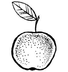 Apple Sketch Hand Draw vector image vector image