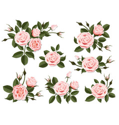 pink rose boutonniere set vector image vector image