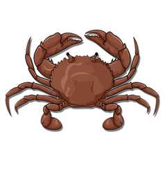 Crab top view vector