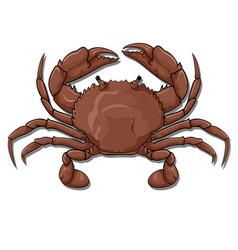 crab top view vector image