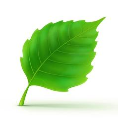 green detailed leaf vector image