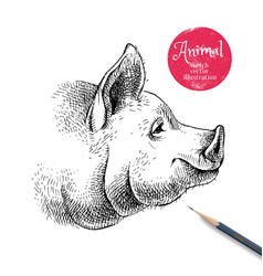 hand drawn sketch pig head isolated profile vector image