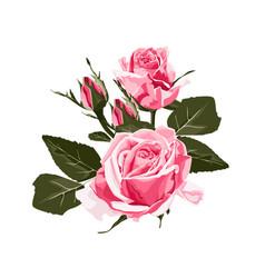 rose elegant card vector image