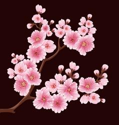 Sakura flower branch element elegant vector