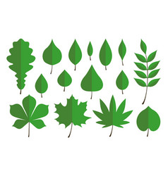 Set of green autumn leaves vector