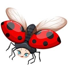 Ladybug flying on white background vector image vector image