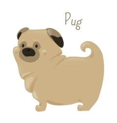 Pug isolated on white Child fun pattern icon vector image vector image