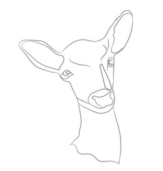 deer portrait vector image