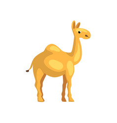 Egyptian camel cartoon character of desert animal vector