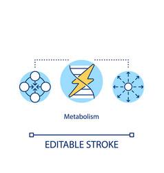 Metabolism concept icon energy transformation vector