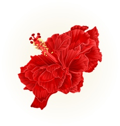 Red hibiscus corrugated simple tropical flower vector image