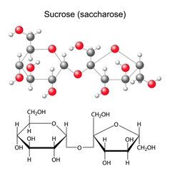 Structural chemical formula and model of sucrose vector image