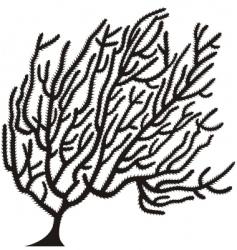 coral vector image