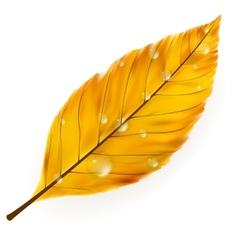 Autumn leaf isolated on white plus EPS10 vector image