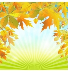 autumn leaves on the abstract background vector image