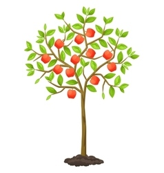 Fruit tree with apples vector