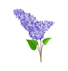 Lush branch blue lilac vector