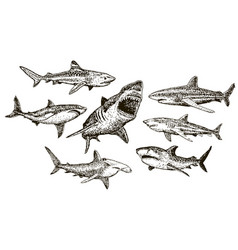 ink hand drawn shark icon set vector image vector image