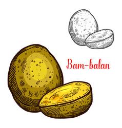 Bam-balan sketch yellow tropical fruit vector