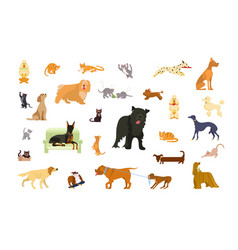 big set of cats and dogs vector image
