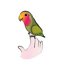 cute lovebird parrot vector image