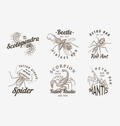 set insects logos vintage pets labels for bar vector image