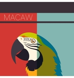 Flat postcard with Macaw vector image