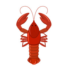 crayfish on white background vector image