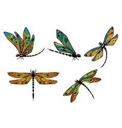 Dragonflies with ornamental openwork wings vector image