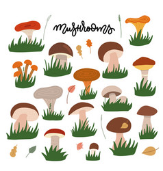 forest mushrooms with gress flat set vector image