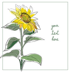 Sunflower minimal card vector