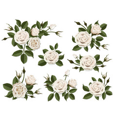 white rose boutonniere set vector image