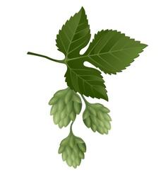 hop brunch vector image