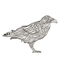 Bird raven coloring book for adults vector