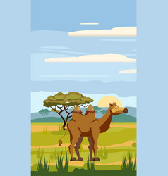 camel cute cartoon style in background savannah vector image