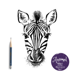 hand drawn sketch zebra head isolated cute vector image